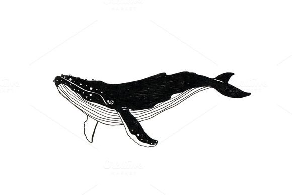580x387 Check Out Whale Illustration + Paper Texture