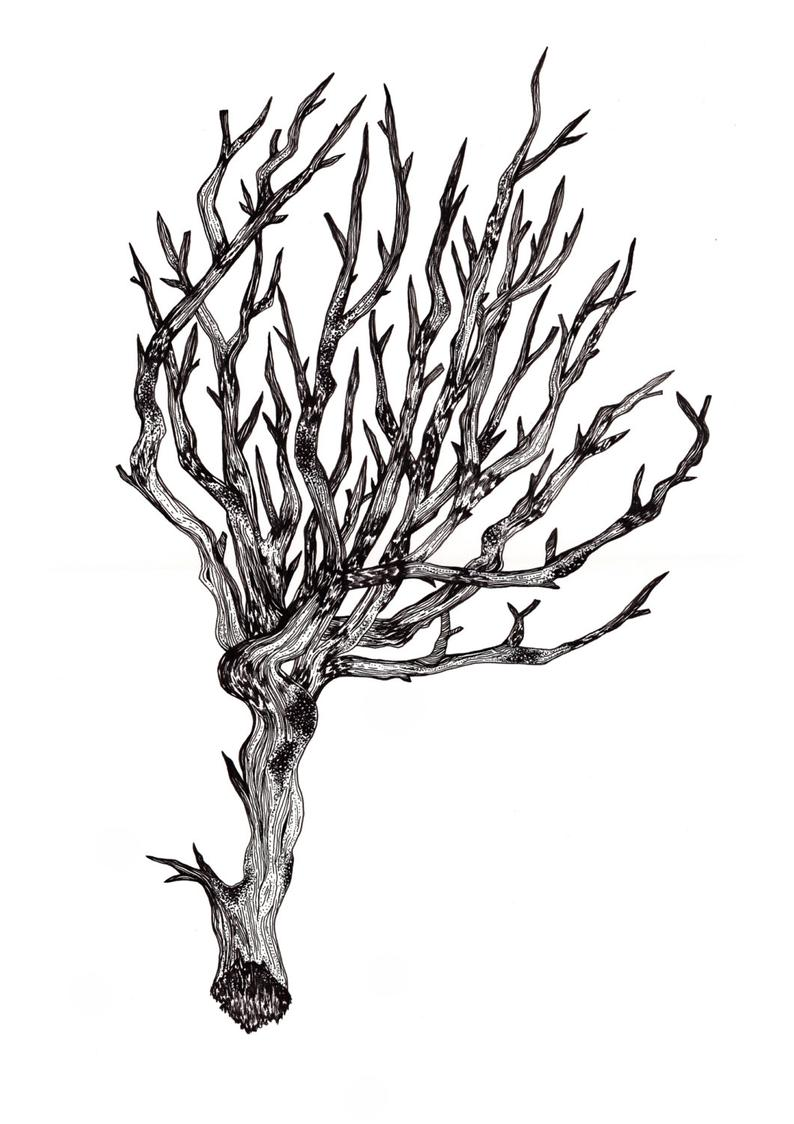 794x1124 tree art illustration nature tree drawing nature ink etsy