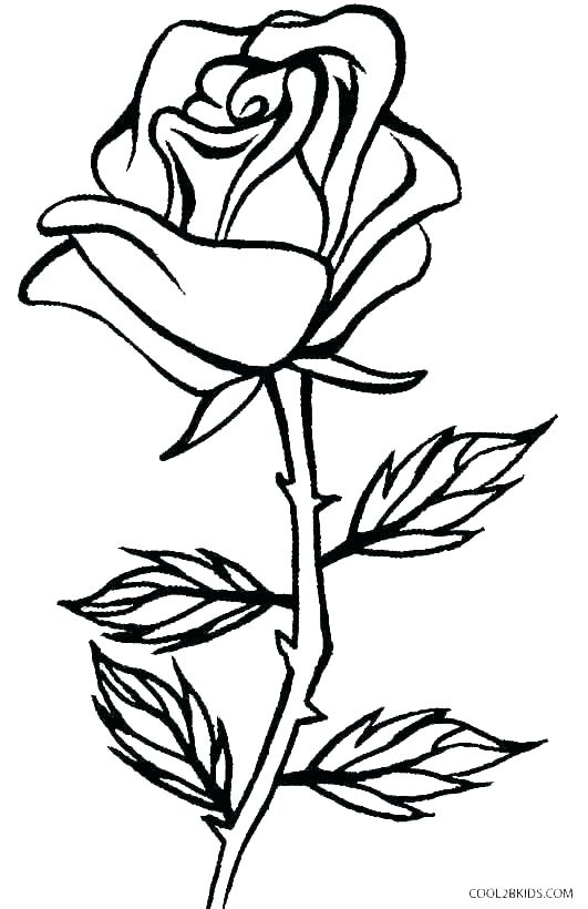 531x820 Easy Drawings Of A Flower