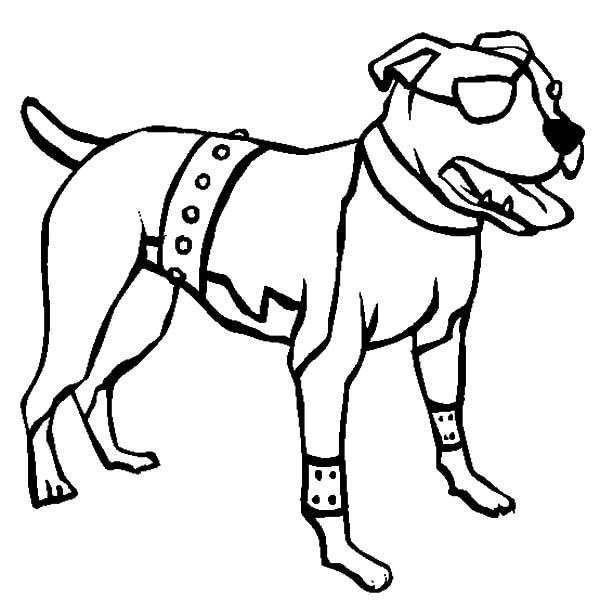 600x612 Free Coloring Pages Of Drawing Pitbull, Coloring Pages Of Pit