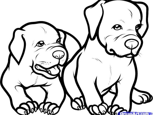 640x480 How To Draw A Pitbull Puppy Step