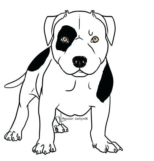 534x559 Pitbull Drawings Pit Bull Drawing