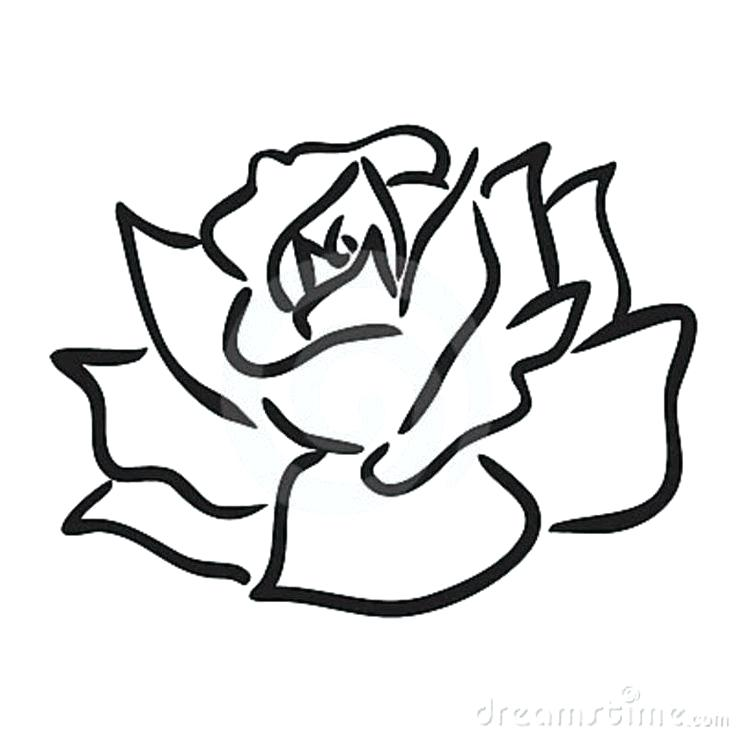 736x736 Easy Drawing Roses Easy Rose Drawing Images
