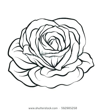 450x470 easy rose to draw draw a rose rose drawing easy rose flower