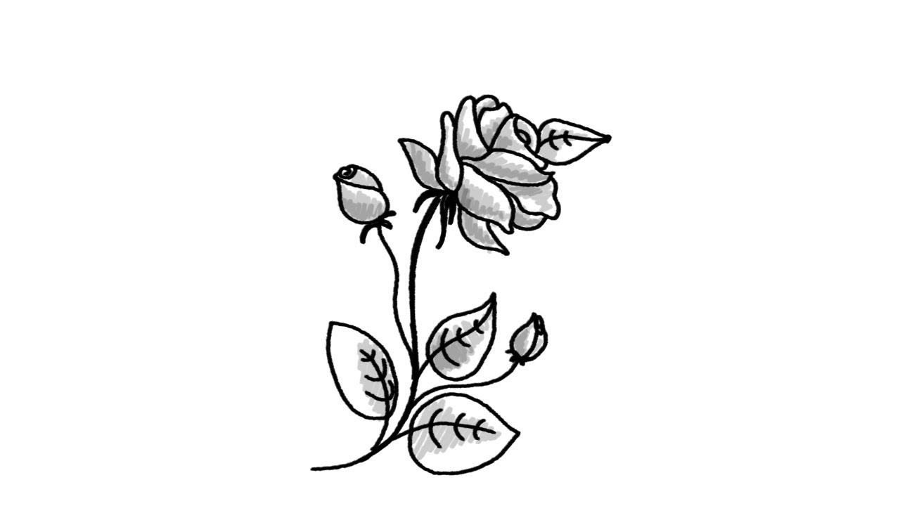 1280x720 How To Draw A Beautiful Rose Flower Step