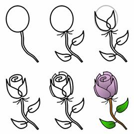 269x269 How To Draw Roses With Easy Step