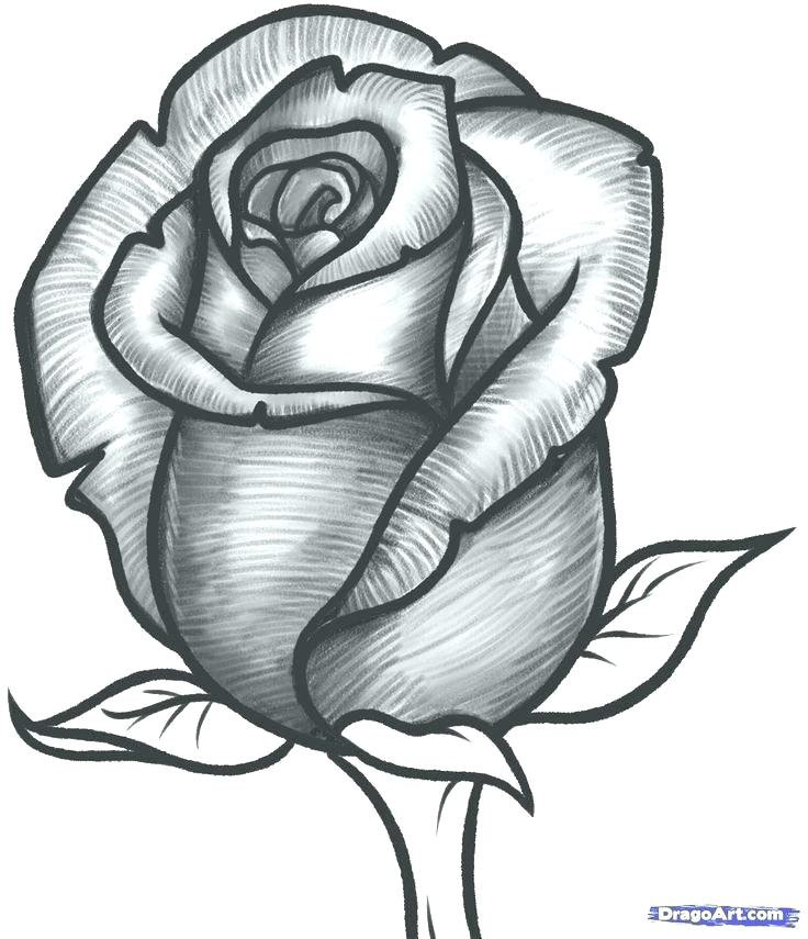 736x855 How To Draw A Big Rose Step