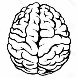 250x250 Brain Anatomical Drawing Hemisphere And Animation Cartoon Styles