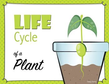 350x270 Life Cycle Of A Plant