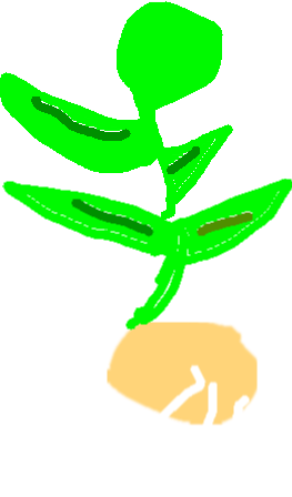 263x448 Plant Life Cycle Tynker