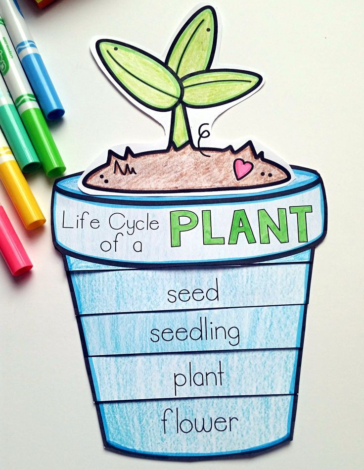 736x950 Plants Unit Plan For K My First Classroom Life Cycles