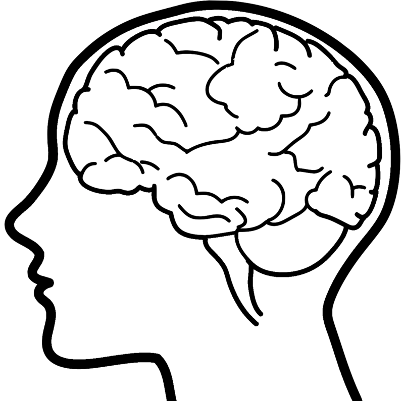800x795 Brain Clipart Brain Drawing Clip Art