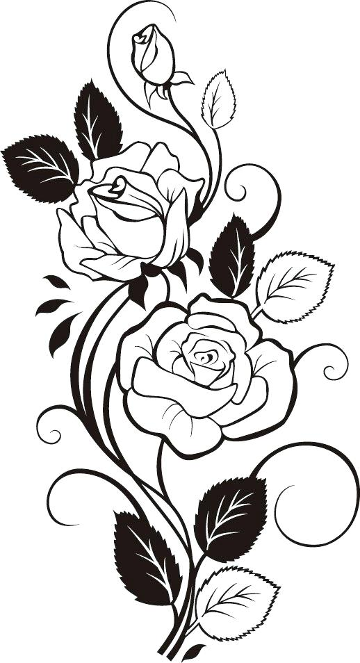 518x954 rose vines drawings rose vines tattoos architecture synonym