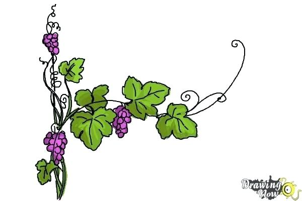 600x400 vines drawing flower on vines vines drawing png