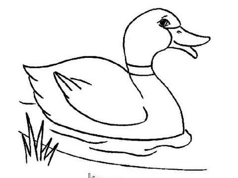 Duck Drawing | Free download on ClipArtMag