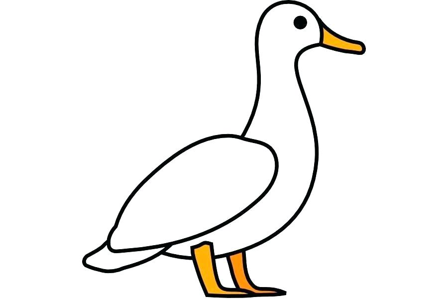 900x600 rubber duck outline rubber duck outline drawing detailed drawing