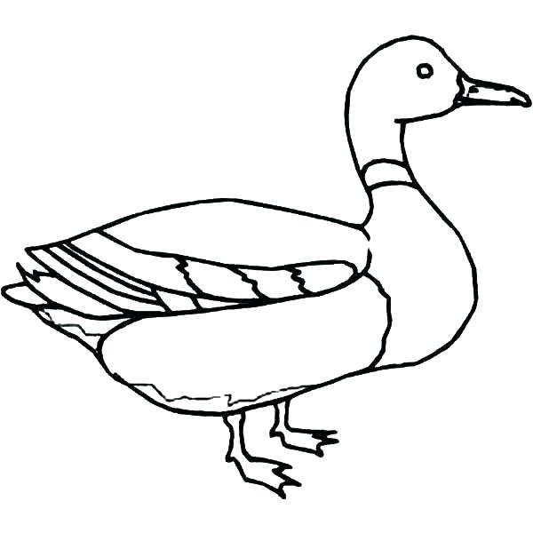 600x600 Coloring Pagesduck Coloring Pages Of Ducks Coloring Pages Ducks