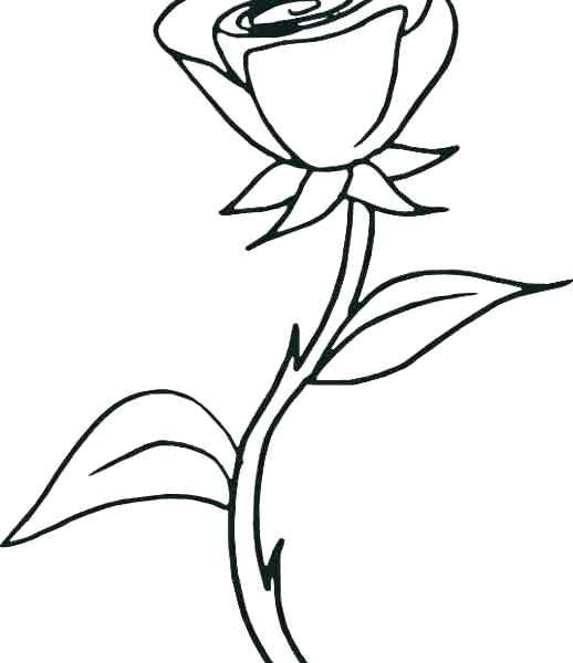 Dying Flower Drawing Free Download Best Dying Flower