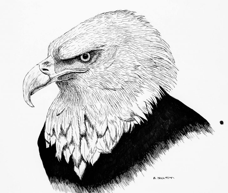 Eagle Black And White Drawing | Free download on ClipArtMag
