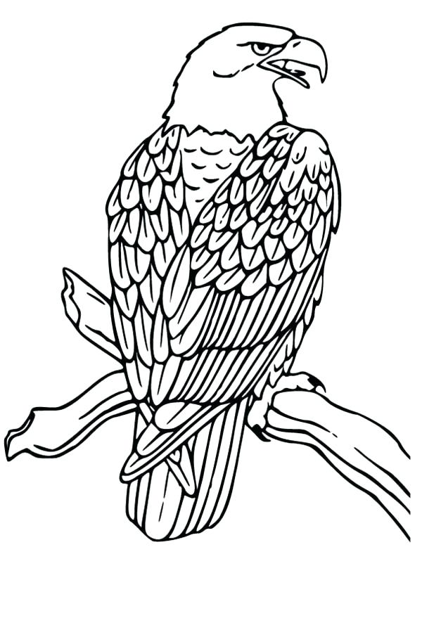 600x879 How To Draw An Eagle Easy How To Draw A Cartoon Eagle Step Draw