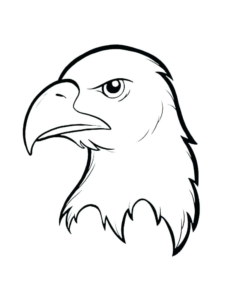 750x1000 Coloring Pages Eagle Bald Color