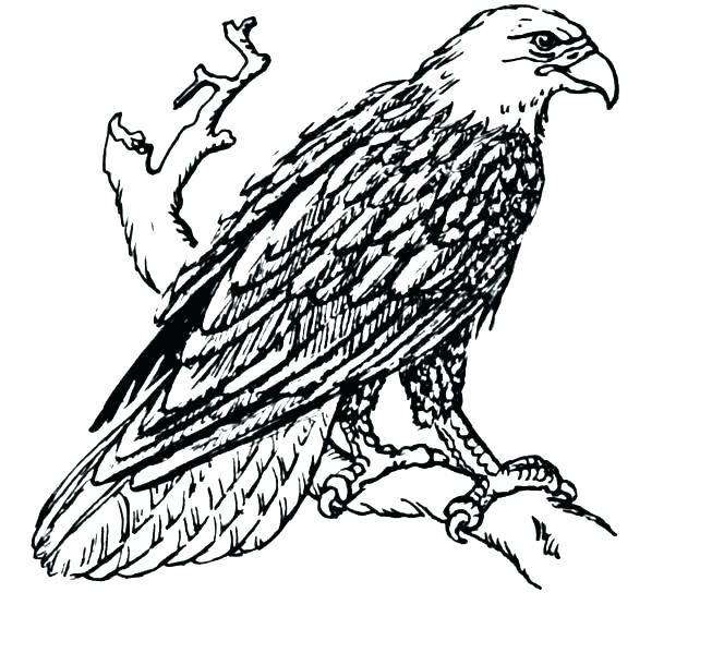 653x599 Coloring Pages Coloring Pages Bald Eagle And Us Flag Of Eagles