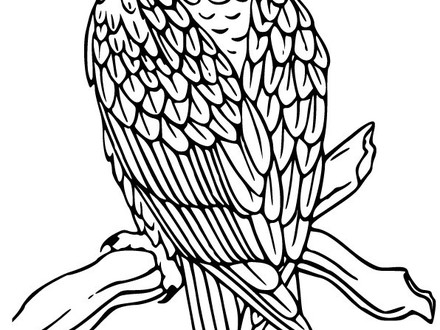 440x330 Free Coloring Pages Of Bald Eagle Drawing, Eagle Color Pages