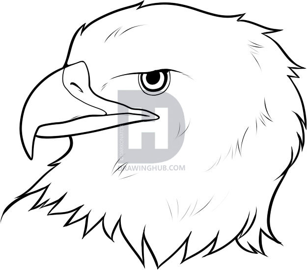 625x550 How To Draw An Eagle Head, Step