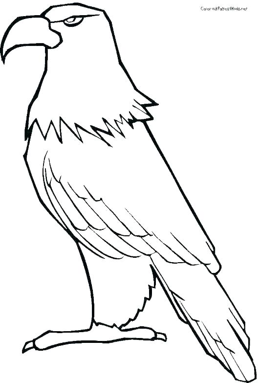 Eagle Drawing Color Free Download Best Eagle Drawing Color