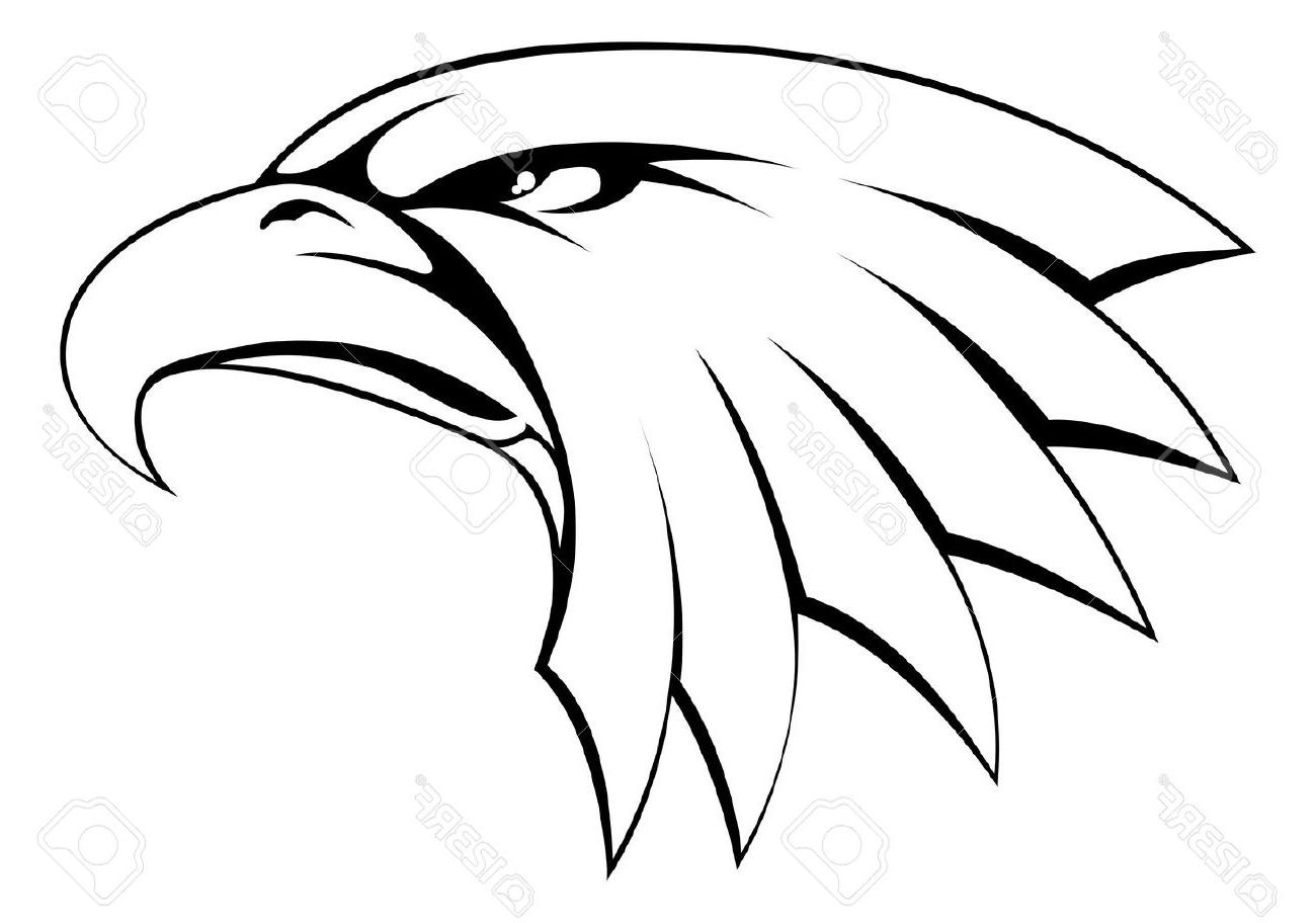 1300x912 Best Bald Eagle Head Drawing Vector Image Free Vector Art