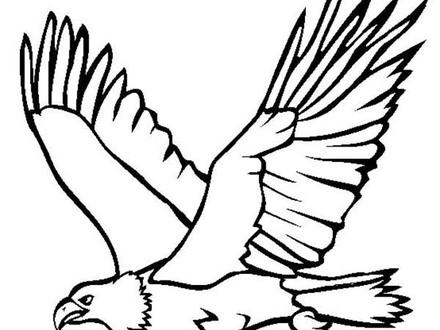 440x330 bald eagle drawing coloring pages, bald eagle coloring pages