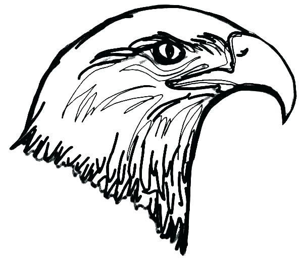 600x524 eagle template animal templates free premium templates bald eagle