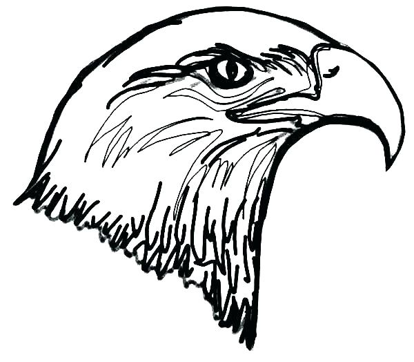 600x524 Eagle Template Printable Bald Feather Powerpoint