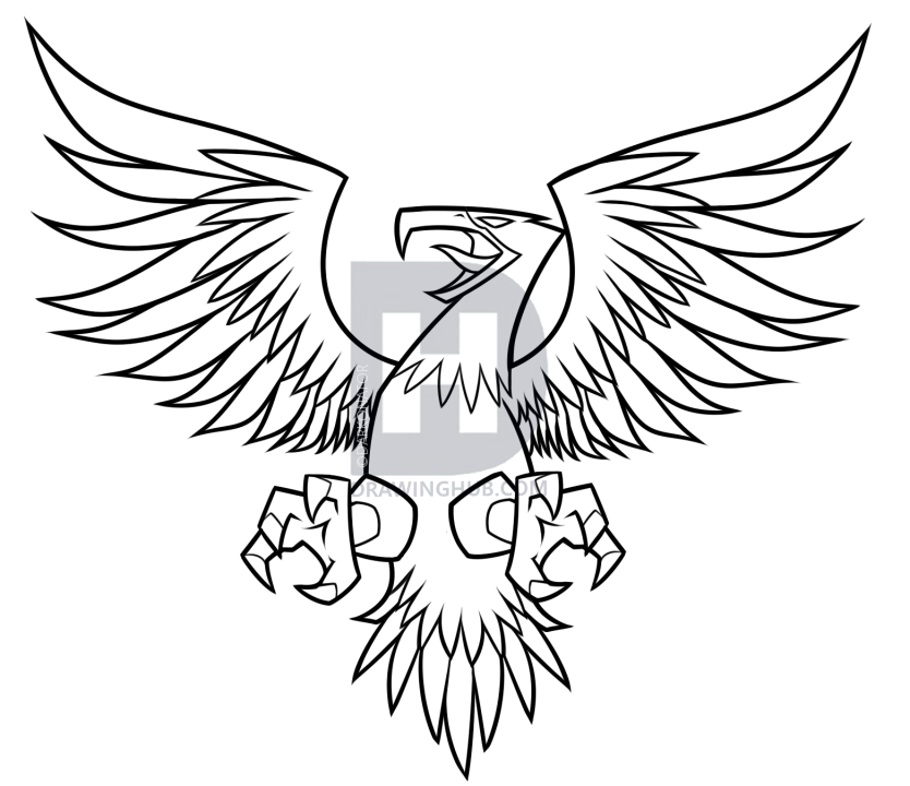 834x720 How To Draw A Flying Eagle, Step