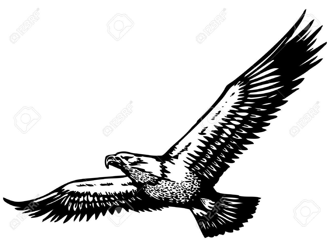 Eagle In Flight Drawing