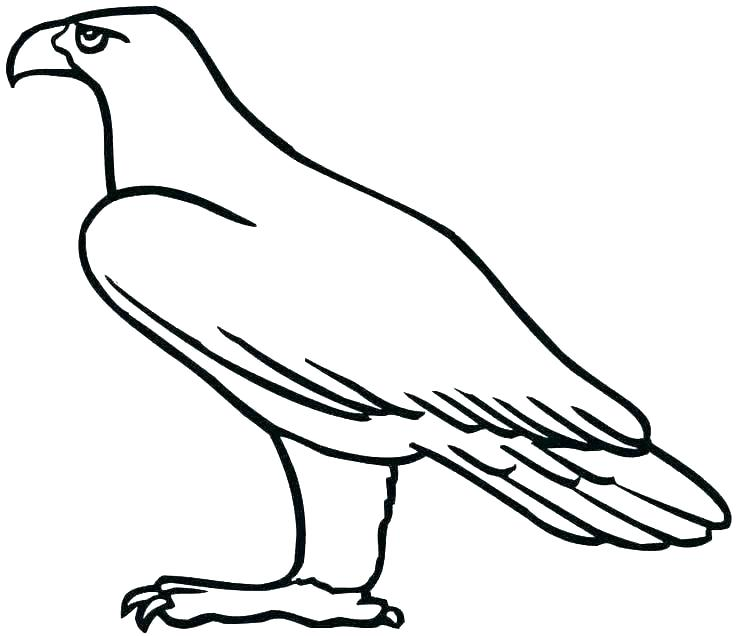 736x636 bald eagle coloring bald eagle coloring pages eagles pictures