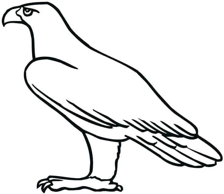 736x636 Eagles Football Coloring Pages Eagle Color