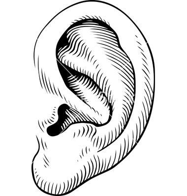 380x400 human ear vector image on inspiration ear images, ear, human ear