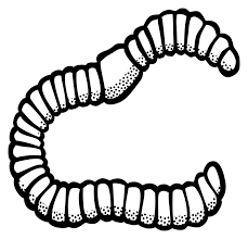 229x220 Image Result For Black And White Clip Art Of Earth Worm Pictures