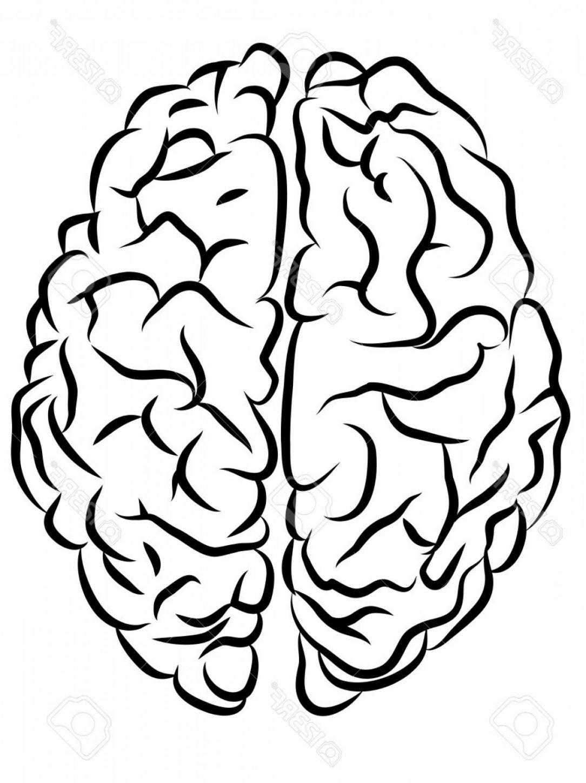 1084x1448 Brain Easy Cartoon Drawing Diagram Outline Carmi Chaelinn