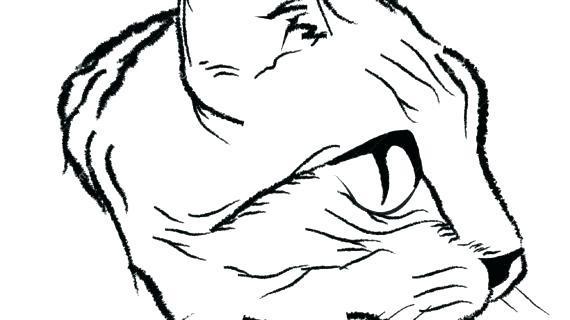 570x320 Draw Simple Cat Face