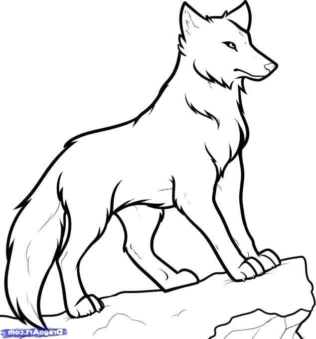 634x679 Wolf Drawing Easy Amazing Coyote Tattoo Designs Wolves Drawing