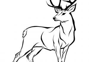300x210 Easy Stag Drawing Easy Deer Head Drawing At Getdrawings Free
