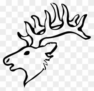 320x313 Elk White Tailed Deer Moose Drawing