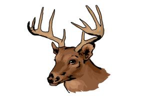 300x200 How To Draw A Deer Head