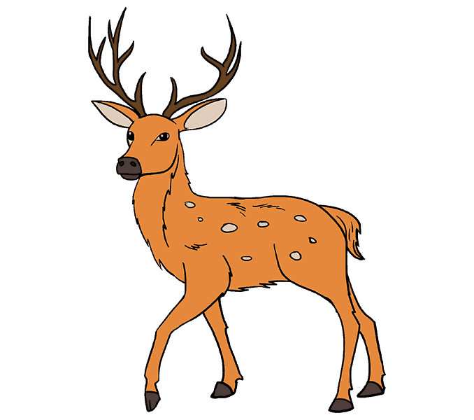 678x600 How To Draw A Deer In A Few Easy Steps Easy Drawing Guides
