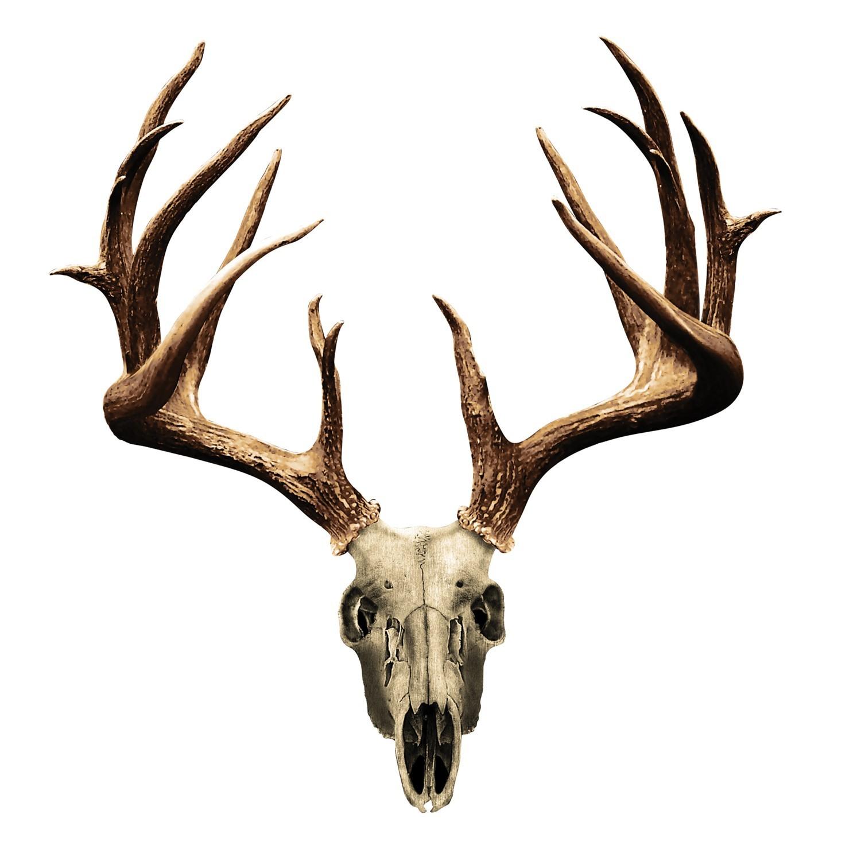 1500x1500 Deer Skull Drawing