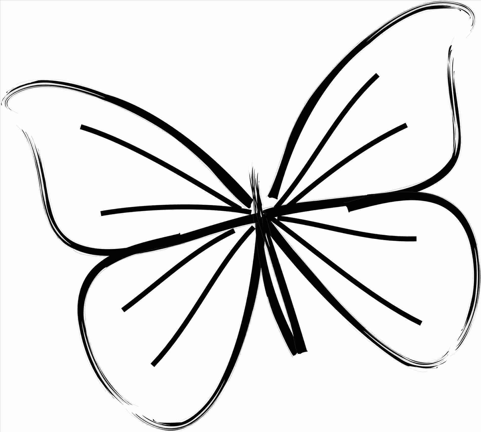 1899x1705 Butterfly Cool S For Teens Rhcollectioncom Fresh Rhpnlsus S Easy
