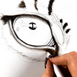 Easy Drawings In Pencil