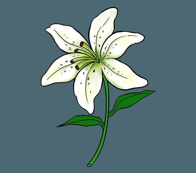 678x600 Flower Drawing Step
